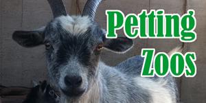 Petting_Zoo_sm